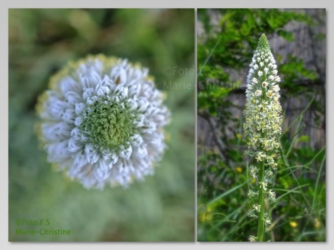 Fleurs   Insectes - fotomarie-christine-fr cmonsite fr